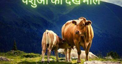 पशुओं की देखभाल कैसे करें | pashu ki dekhbhal kaise kare