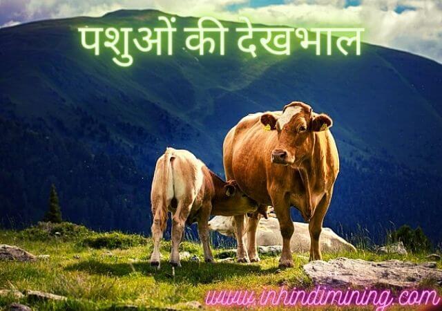 पशुओं की देखभाल कैसे करें   pashu ki dekhbhal kaise kare