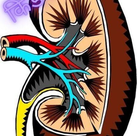 किडनी क्या होती है? Kidney Meaning in Hindi - inhindimeaning