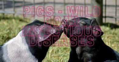 Pigs - Wild Boar infectious diseases with African swine fever