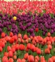List of Flowers Name in Hindi and English,Flowers Name
