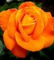 101+ Best List of Flowers Name in Hindi and English, List of Flowers, Flowers Name