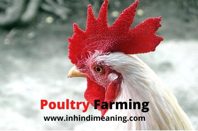 Best Poultry Farming for Beginners guide in India - मुर्गी फार्म,