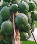 Fruits Name List in Hindi and English - फलों के नाम, fruits name in hindi and english, fruits name in hindi, fruits name in english, all fruits name in english.